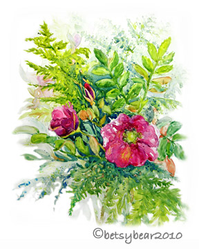 sitka rose watercolor